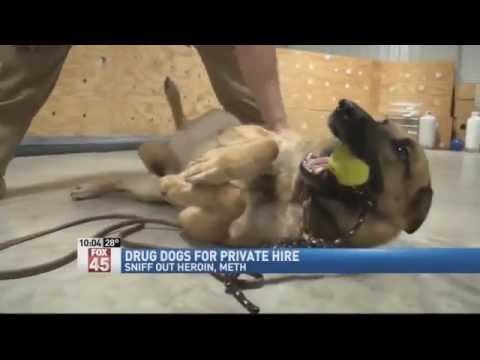 Drug Sniffing Dogs For Private Hire by K9 Solutions Center dopedog.com in Dayton Ohio