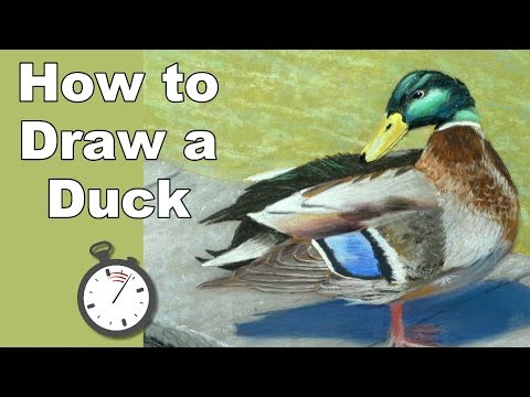 How to Draw a Mallard Duck at a Pond in Pastel Time Lapse