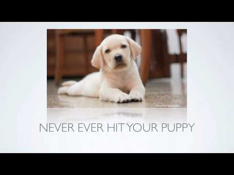 [Puppy Training Tips] How Can I Stop Puppy Biting And Other Aggressive Behavior?