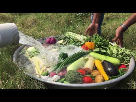 Cooking 3 Chickens with 30 Different Vegetables - TASTIEST CHICKEN AND VEG GRAVY  - Veg Chicken