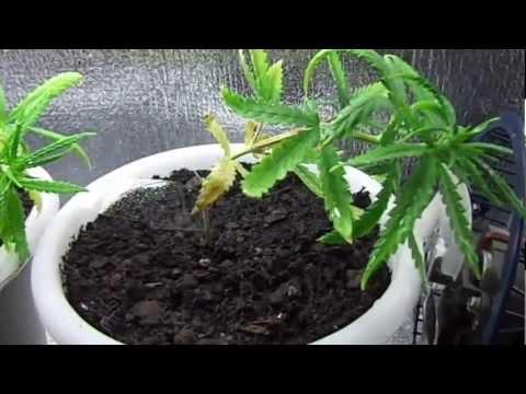 PC Grow Box Week 6