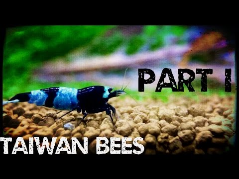How to Keep and Breed Taiwan Bees - Part I