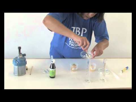 Video 16   CATALASE IN POTATOES