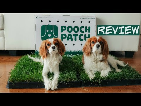 Pooch Patch Review | 100% Real Grass Dog Potty | Potty Training
