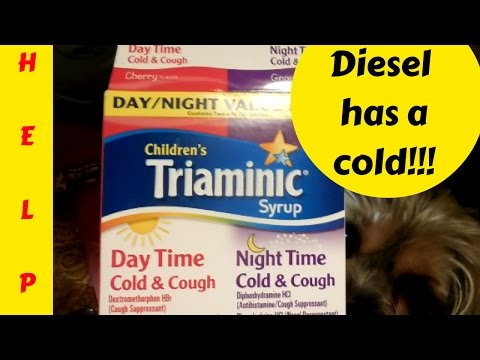 Vlog: Diesel Has A Cold...Home Remedi For Sick Dog!!!!