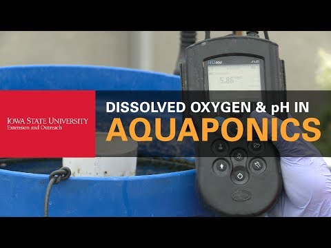 How to Check the Oxygen and pH Levels in Your Aquaponics System