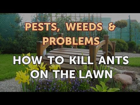 How to Kill Ants on the Lawn