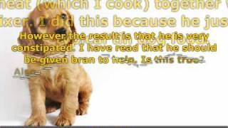 Tips To Cure Your Dog Of Constipation