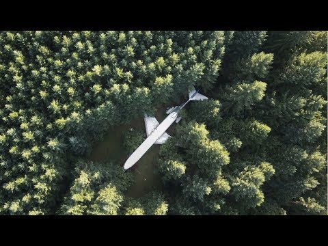 An Airplane in the Woods