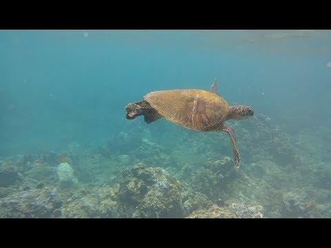 LG G6 Underwater Snorkeling Test!
