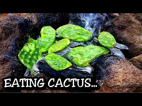EATING CACTUS primitive style -
