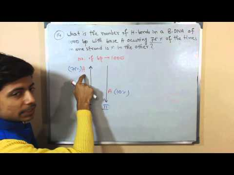 DNA base pairing and hydrogen bond in DNA problem   CSIR NET exam answers