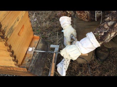 How to Use an Oxalic Acid Vaporizer to Treat Honeybees for Varroa Mites