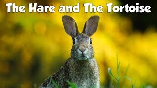 The Hare and The Tortoise Story, Fable by Aesop | Moral Story for Kids with Audio in English