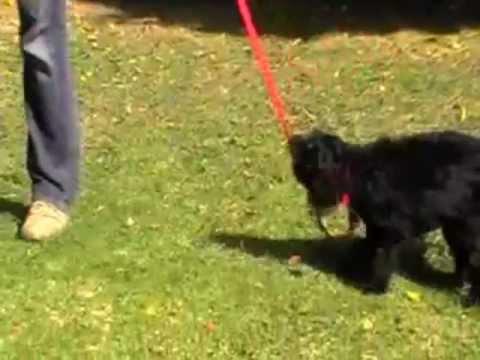 Dog Trainer-