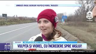 Vulpița și Viorel, drumul spre casă: