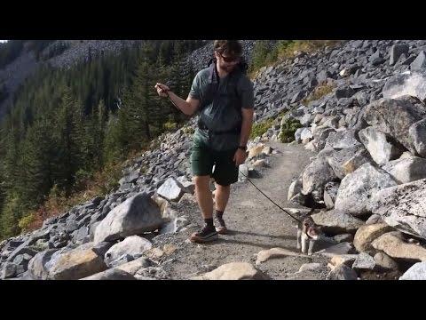 Honey Bee: Blind Cat Goes Hiking