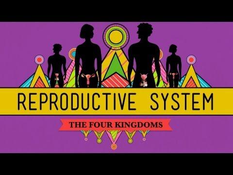 The Reproductive System: How Gonads Go - CrashCourse Biology #34