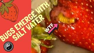🆕Worms in Strawberries!? 👉Strawberries soaked in salt water on TikTok