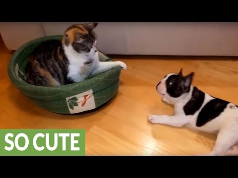 This Compilation Proves That Cats And Dogs Can Get Along Just Fine