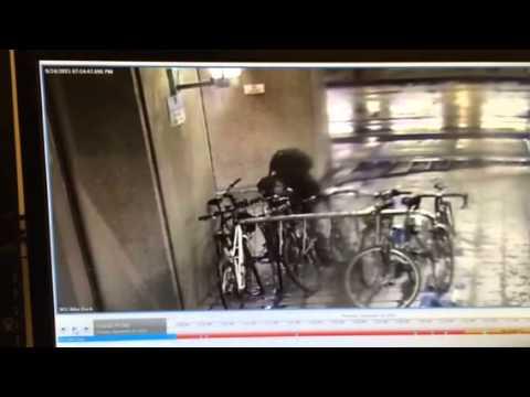 Vancouver Bike Theft SFU Harbour Centre