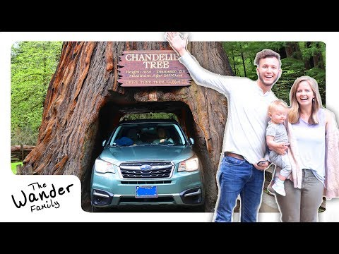 DRIVING OUR CAR INTO A TREE!! | The Wander Family