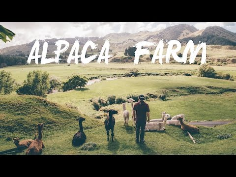 New Zealand Ep.7 | Alpaca Farm