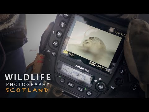 PHOTOGRAPHING MOUNTAIN HARES part 1 | Wildlife photography in Scotland