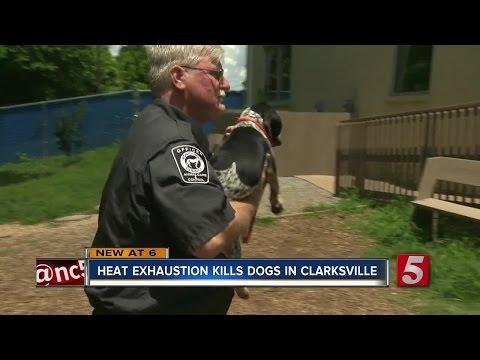 3 Dogs Die Of Heat Exhaustion In Clarksville