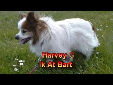 My Mate Harvey & Me