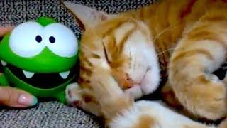 Kedi Omnom'a sinirleniyor.