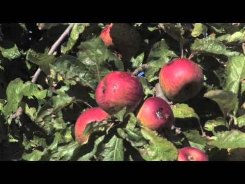 The Cider highway Project