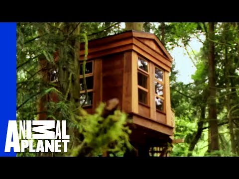 An Ancestral, Tribal Treehouse | Ultimate Treehouses