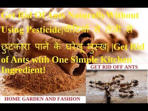 Get Rid Of Ants Naturally Without Using Pesticide|चीटियों से तेजी से छुटकारा पाने के घरेलू नुस्ख|