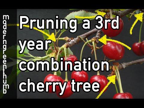 Pruning Combination Cherry Tree #1