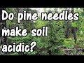 Do Pine Needles Make Soil More Acidic? Truth or Gardening Myth?