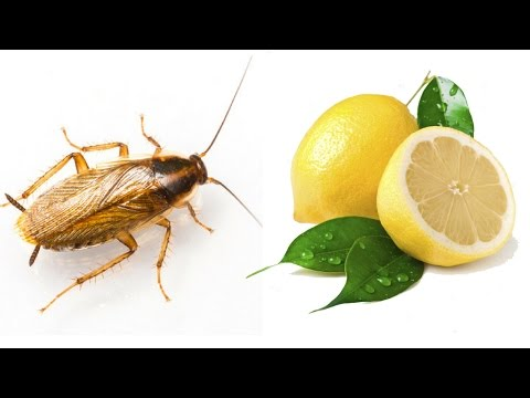 PROVEN: Get Rid of Cockroaches Naturally