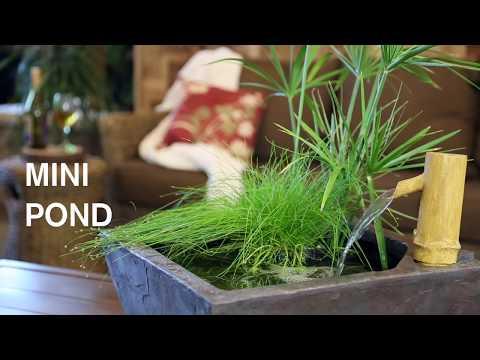 How to Create a Mini Pond
