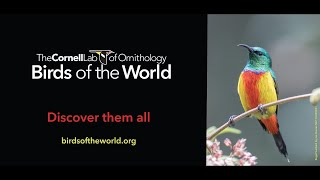 Birds of the World: In-depth species accounts for every bird in the world!