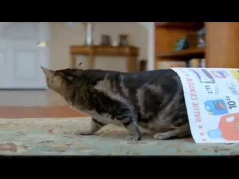 TV Spot - Iams Pro Active Health Indoor Weight Care For Cats - Camo's Extra Pounds