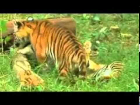 Save Wildlife...