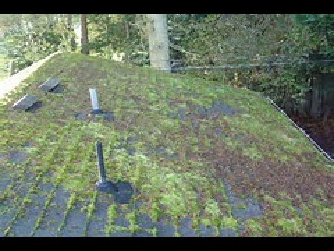 How to Remove  Moss on Roof Fast ! Part 1 Before