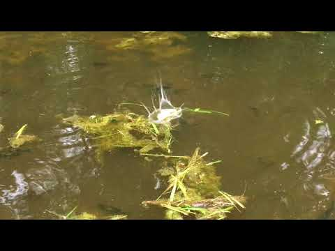 Feeding Time For Our Fish Our Catfish Bass And Bluegill LOVE Bread