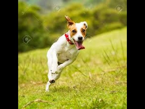How to teach your dog a backflip