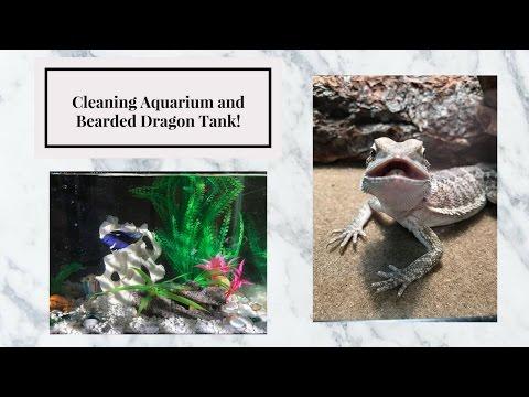 How I Clean My Aquarium and Bearded Dragon Tank