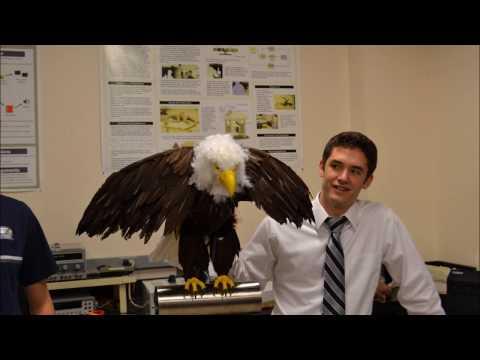 Animatronic Eagle