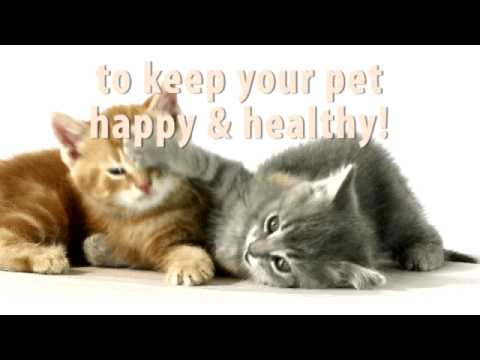 Keeping your pet healthy and happy
