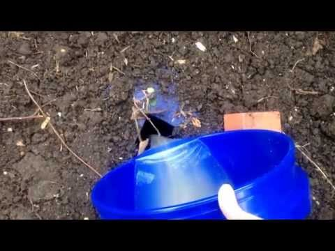 DIY doggy septic system
