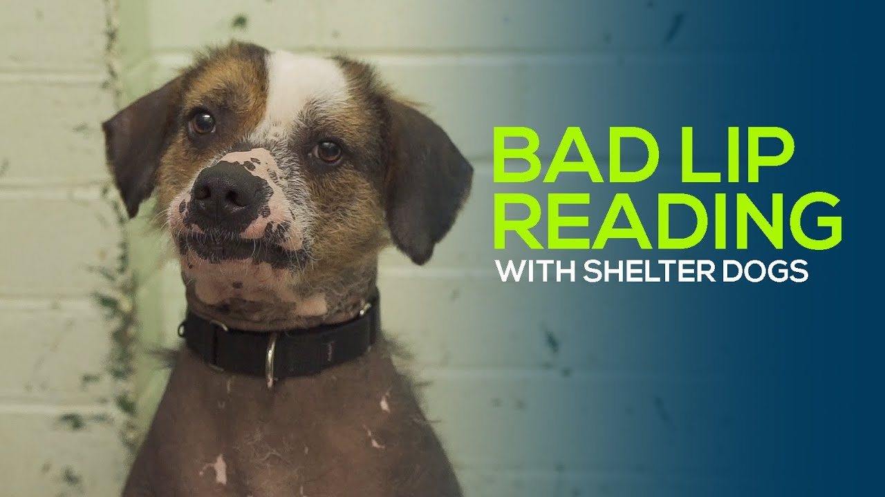 Bad Lip Reading - With Shelter Dogs!