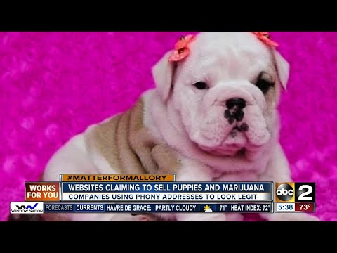 Websites claiming to sell puppies & marijuana at the Maryland fairgrounds